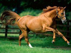 cavallo_trotto-3711d30c