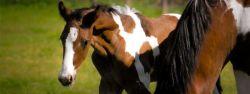 foal-8326ba86