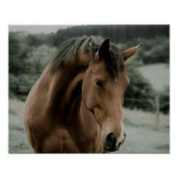 horse-1-4dbffda7