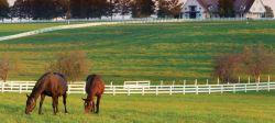 horsepaddockshowcase-4f68ba72