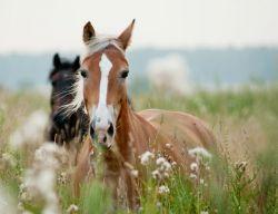 horses-ears-8e22fd81-1
