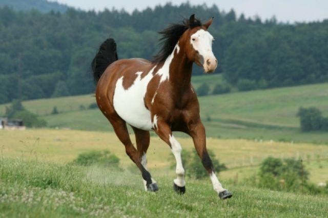 paint-horse-3962b555