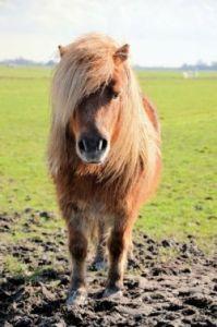 pony-316672_1280-e1c8ad65