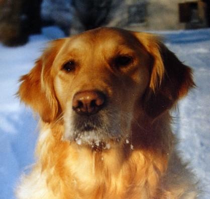 Topsy - min första egna hund.