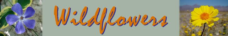 SegPlayPC_WFLBanner.jpg