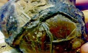 Misteriosa mappa stellare rinvenuta su una roccia in Indonesia
