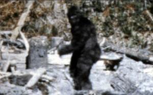 Risolto il mistero di Bigfoot?