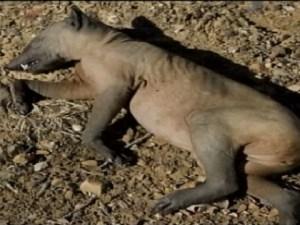 Scoperti in Argentina alcuni animali privi di sangue, organi e ossa