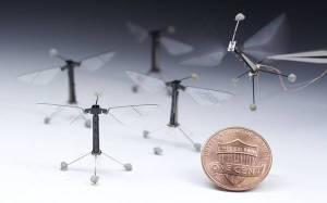 Arrivano i robot-insetto