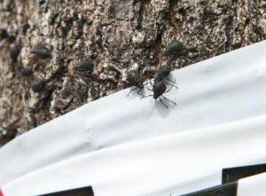 Misteriosi insetti invadono Milano