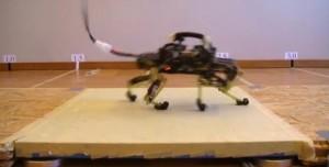 ll ghepardo robot che si muove come un gatto