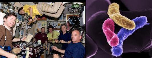 Batteri mutanti stanno corrodendo la Stazione Spaziale Internazionale