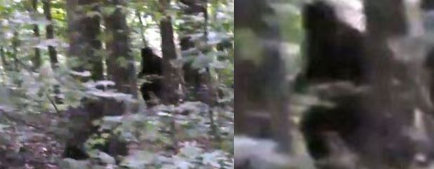 Incredibile avvistamento Bigfoot