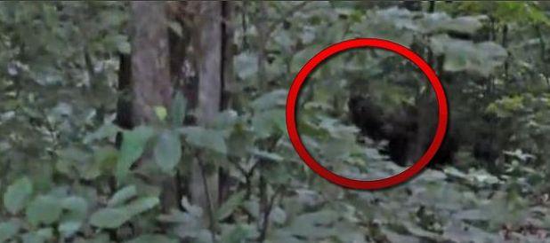 Incredibile avvistamento Bigfoot