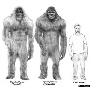 """Utah: """"Ho trovato una testa fossile di Bigfoot"""""""