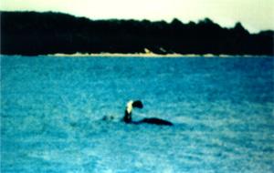 Il mistero del mostro del lago Champlain