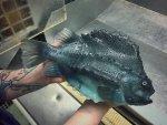 Pescatore Russo pubblica scatti di strane creature degli abissi 11