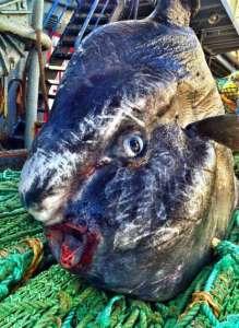 Pescatore Russo pubblica scatti di strane creature degli abissi 12