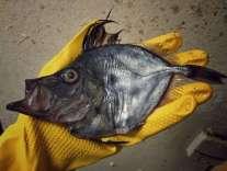 Pescatore Russo pubblica scatti di strane creature degli abissi 14