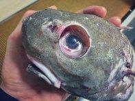 Pescatore Russo pubblica scatti di strane creature degli abissi 19