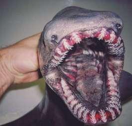 Pescatore Russo pubblica scatti di strane creature degli abissi 2