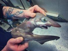 Pescatore Russo pubblica scatti di strane creature degli abissi 20