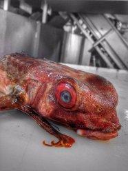 Pescatore Russo pubblica scatti di strane creature degli abissi 24