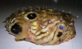 Pescatore Russo pubblica scatti di strane creature degli abissi 26
