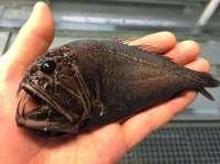 Pescatore Russo pubblica scatti di strane creature degli abissi 4