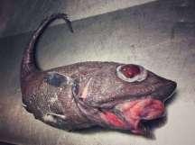 Pescatore Russo pubblica scatti di strane creature degli abissi 6