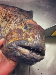 Pescatore Russo pubblica scatti di strane creature degli abissi 9
