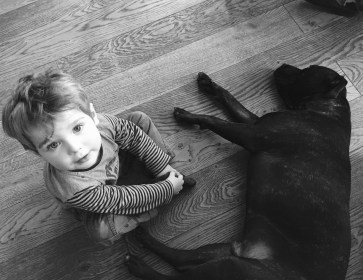 responsabilidad civil intervención asistida con animales