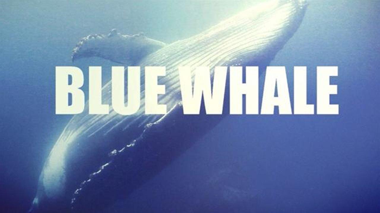 Blue Whale a Ravenna: salvata una 14enne
