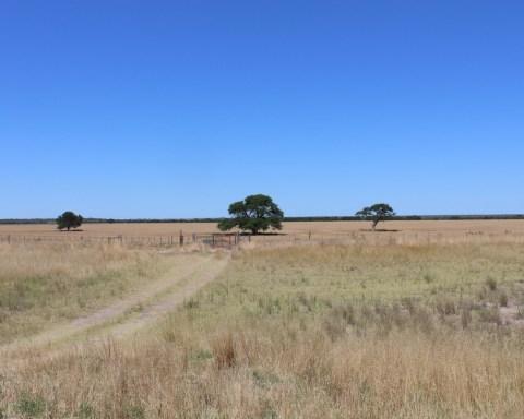 Pyörärikko Argentiinan Pampalla