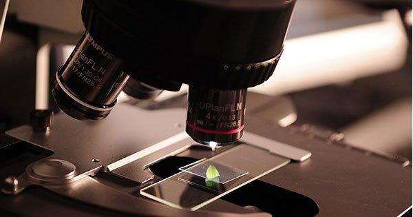 Cuál es la importancia de los Laboratorios de Investigación de Células Madre