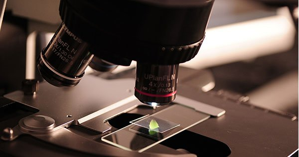 ¿Cómo ofrece la investigación con células madre esperanza para la diabetes tipo 1?