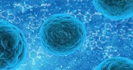 Nuevos posibles usos para las células madres son encontradas por investigadores