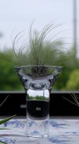 ガラスは艸田正樹さん作