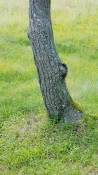 幹の黒さと緑の鮮やかさ 幹のひび割れと、草のさやぎ… 無音と、余韻 似合う、ということは、異質であるということ…