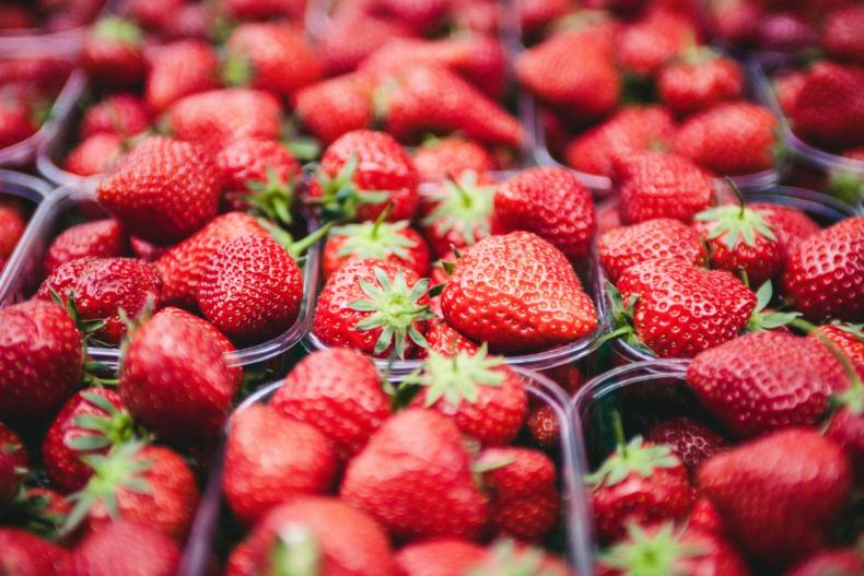 aardbeien plukken als vakantiebaantje?