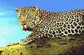 Voyage séjour Golf safari Kenya