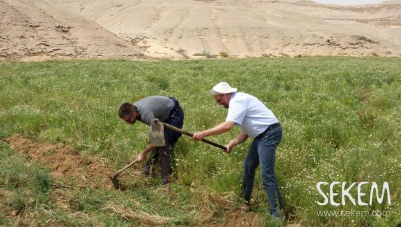 Die SEKEM Freunde aus Österreich beim pflanzen der Bäume
