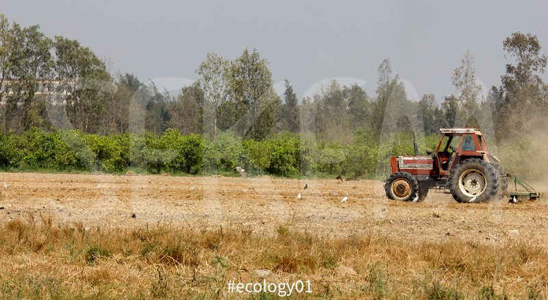 ecology01