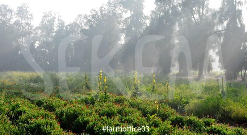farmoffice03