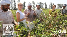 With an Air of Cultural Harmony: SEKEM Celebrates its Organic Cotton Harvest for the Second Consecutive Year