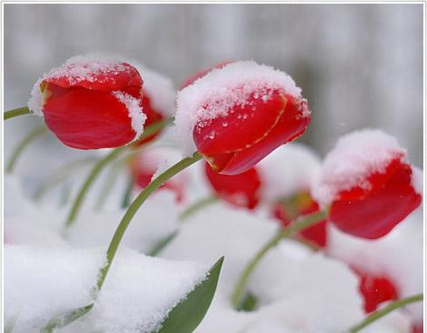 Türkiye Yeni Yıla Kar İle Girecek
