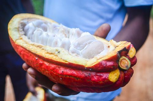 Kabos kakao (flickr, jbdodane)
