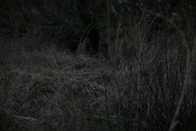Marschland06