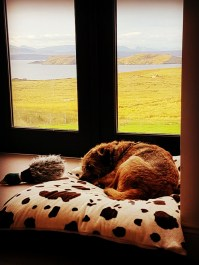 Pets welcome at our luxury self catering lodges