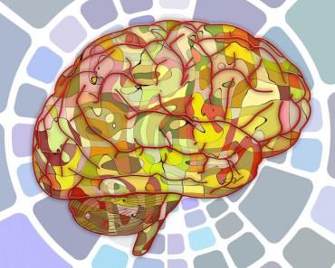 Colorful Brain Diagram